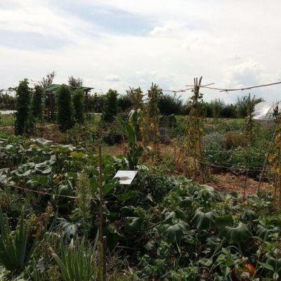 Un demi-cercle de 12 mètres de diamètre, où poussent légumes et fleurs