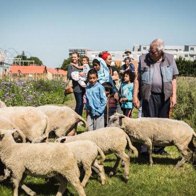 Ouverture de Zone Sensible : les moutons de Clinamen © Anne-Claire Héraud